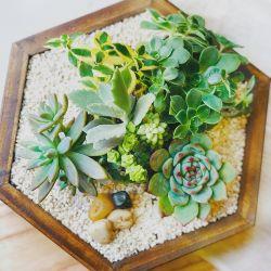 Hexágono de madera con suculentas