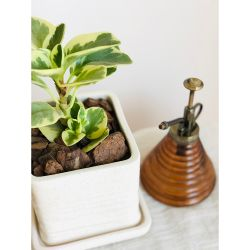 Maceta Cubo + Planta Peperomia