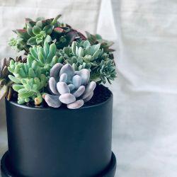 Mini jardín eustaquio negro