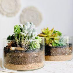 Terrario mix de suculentas 15 cm